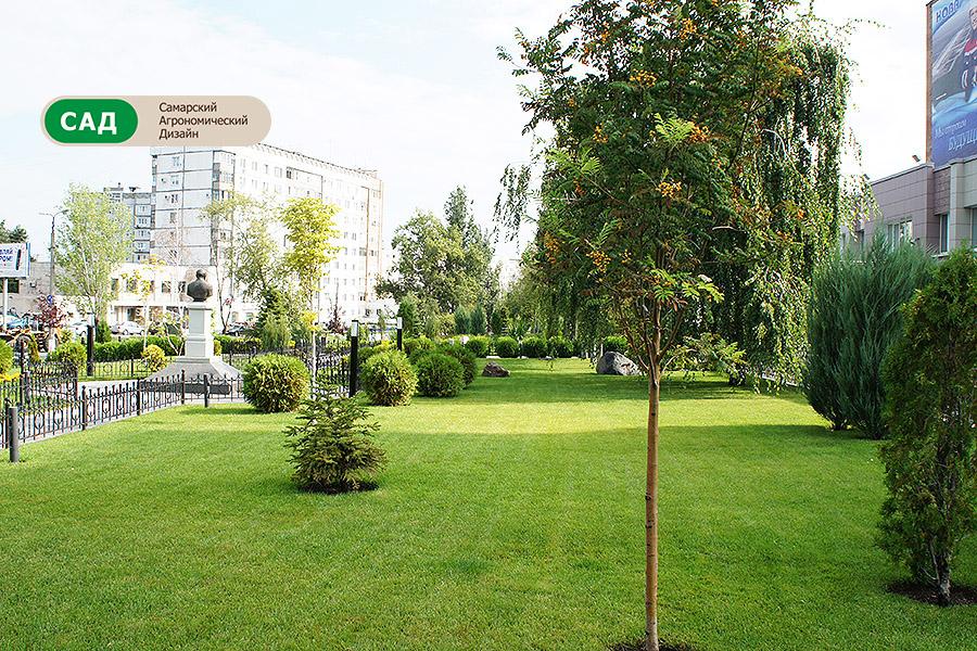 Озеленение участка - Нова